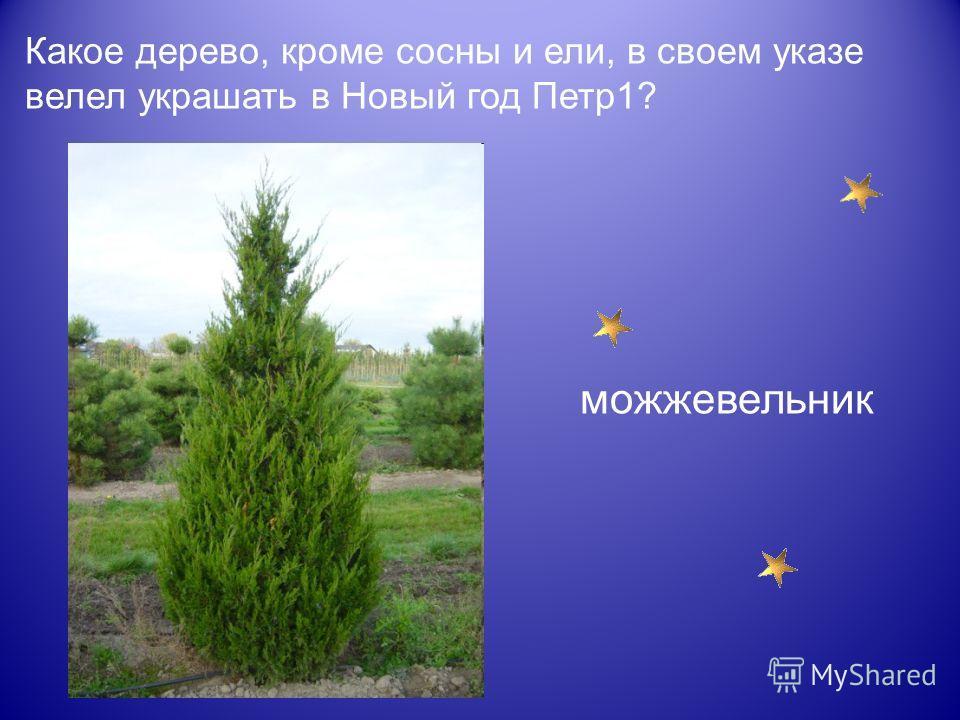 Какое дерево, кроме сосны и ели, в своем указе велел украшать в Новый год Петр1? можжевельник