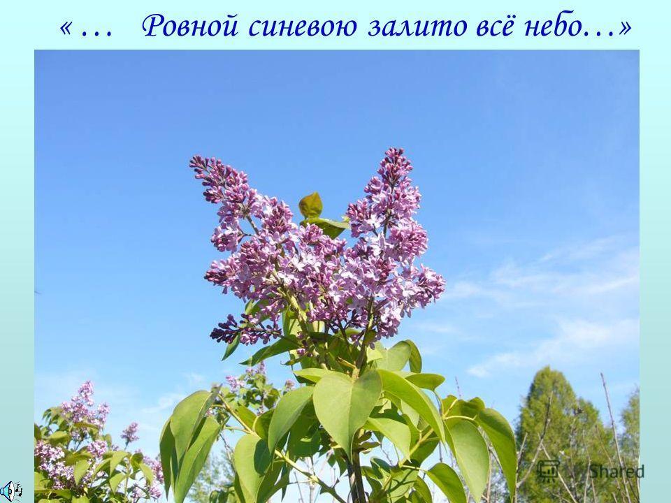 «Деревня» И.С.Тургенева