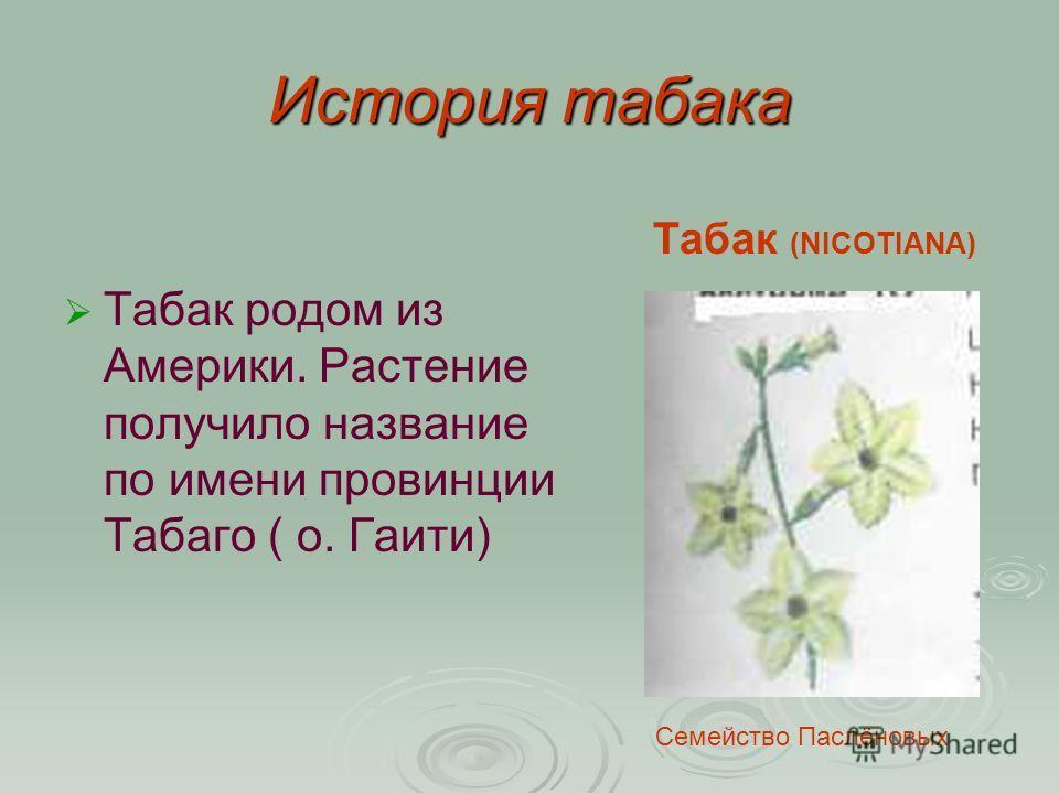 История табака Табак (NICOTIANA) Табак родом из Америки. Растение получило название по имени провинции Табаго ( о. Гаити) Семейство Паслёновых