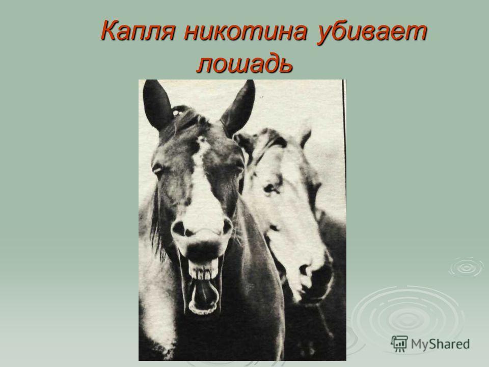 Капля никотина убивает лошадь Капля никотина убивает лошадь