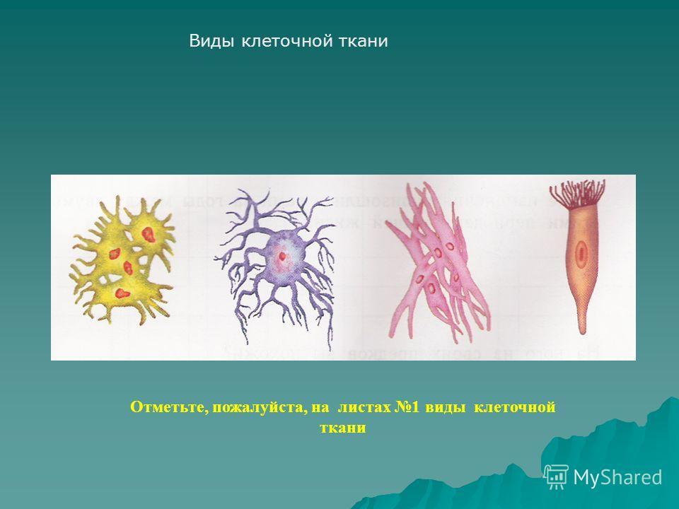 Виды клеточной ткани Отметьте, пожалуйста, на листах 1 виды клеточной ткани