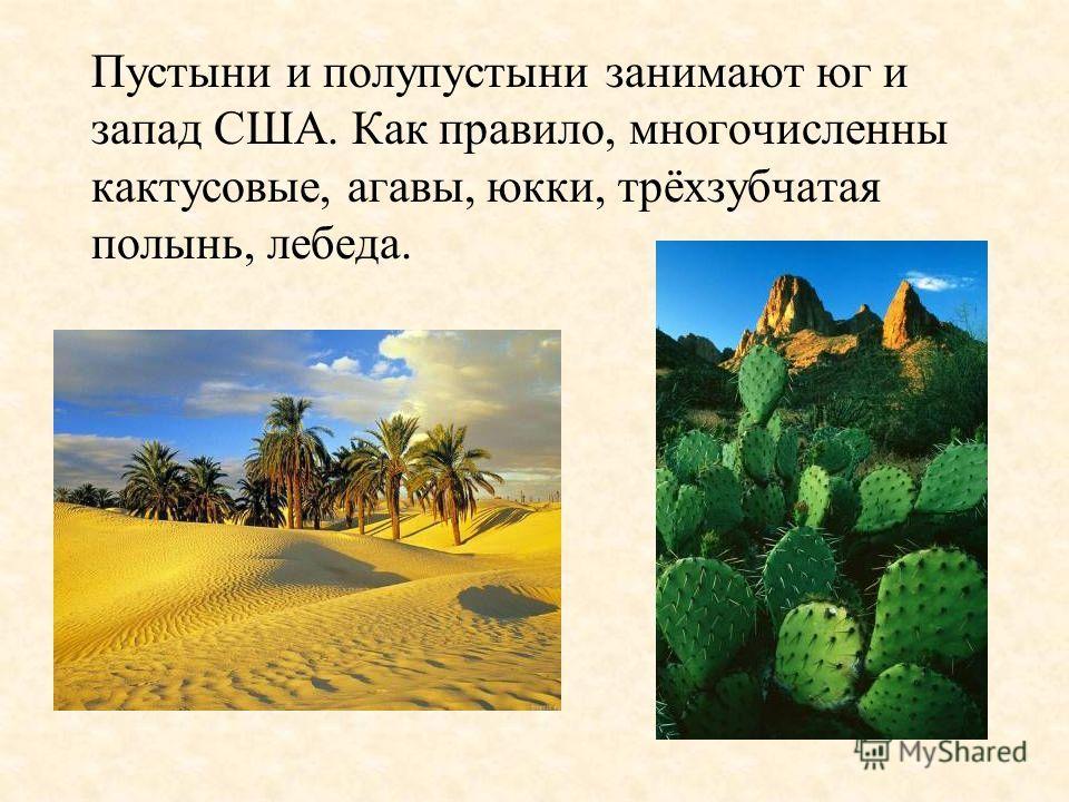 Пустыни и полупустыни занимают юг и запад США. Как правило, многочисленны кактусовые, агавы, юкки, трёхзубчатая полынь, лебеда.