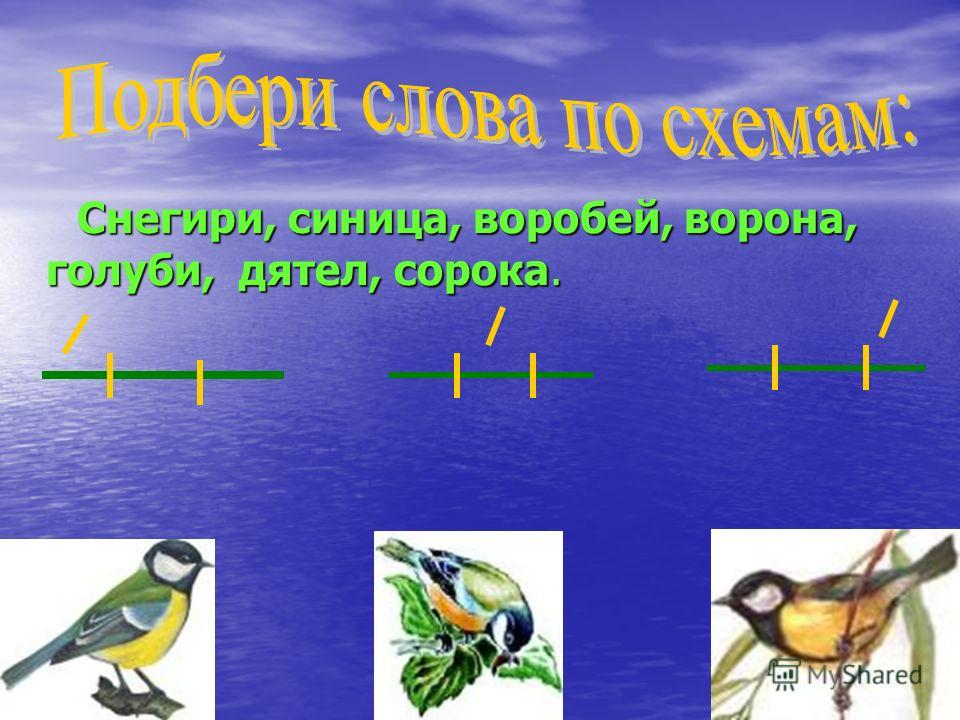 Снегири, синица, воробей, ворона, голуби, дятел, сорока. Снегири, синица, воробей, ворона, голуби, дятел, сорока.