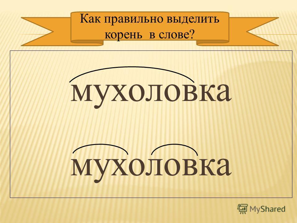 мухоловка Как правильно выделить корень в слове?