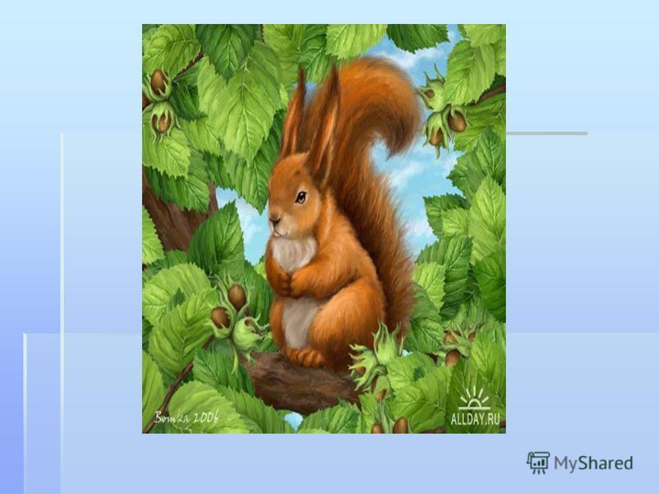 Не мышь, не птица В лесу резвится. На деревьях живёт И орешки грызёт.