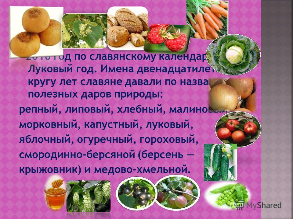 2010 год по славянскому календарю - Луковый год. Имена двенадцатилетнему кругу лет славяне давали по названию полезных даров природы: репный, липовый, хлебный, малиновый, морковный, капустный, луковый, яблочный, огуречный, гороховый, смородинно-берся