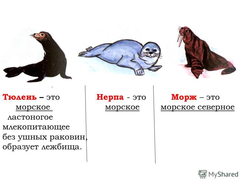 Тюлень – это Нерпа - это Морж – это морское морское морское северное ластоногое млекопитающее без ушных раковин, образует лежбища.