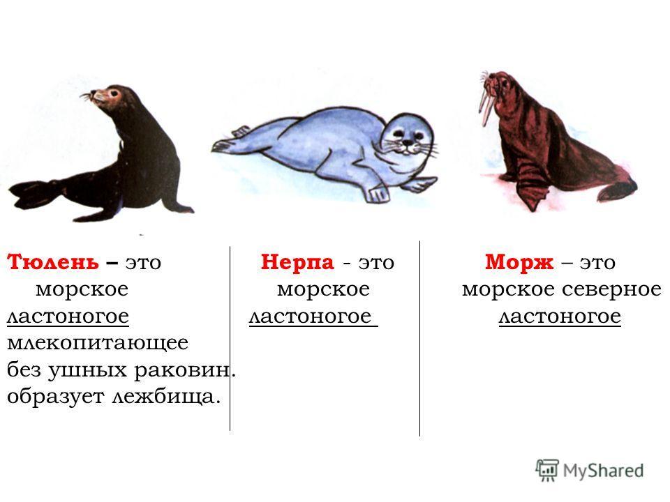 Тюлень – это Нерпа - это Морж – это морское морское морское северное ластоногое ластоногое ластоногое млекопитающее без ушных раковин. образует лежбища.