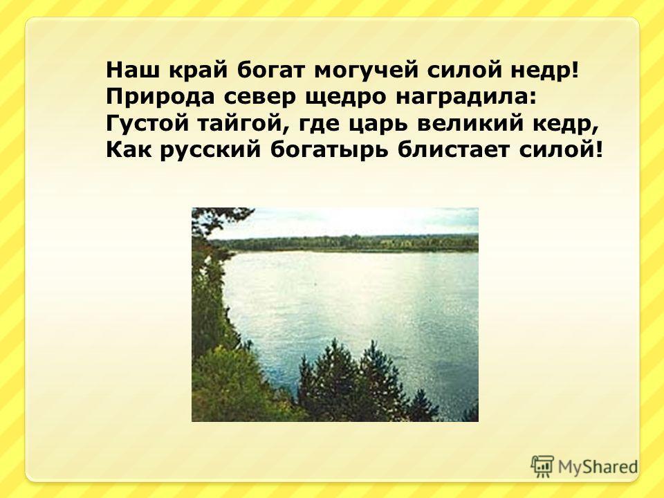 Наш край богат могучей силой недр! Природа север щедро наградила: Густой тайгой, где царь великий кедр, Как русский богатырь блистает силой!