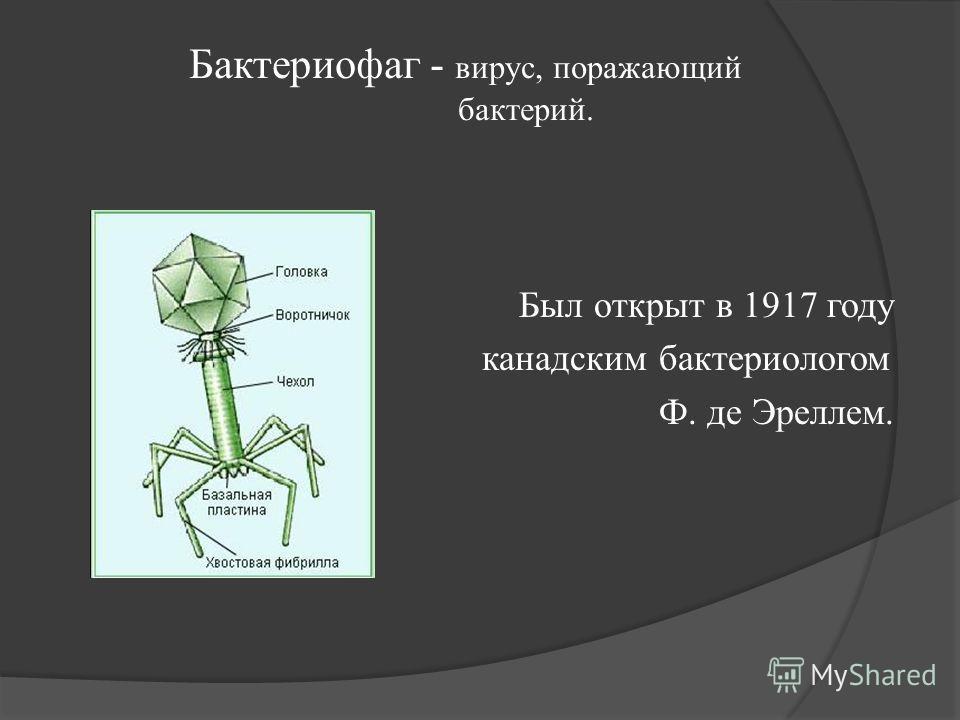 Бактериофаг - вирус, поражающий бактерий. Был открыт в 1917 году канадским бактериологом Ф. де Эреллем.