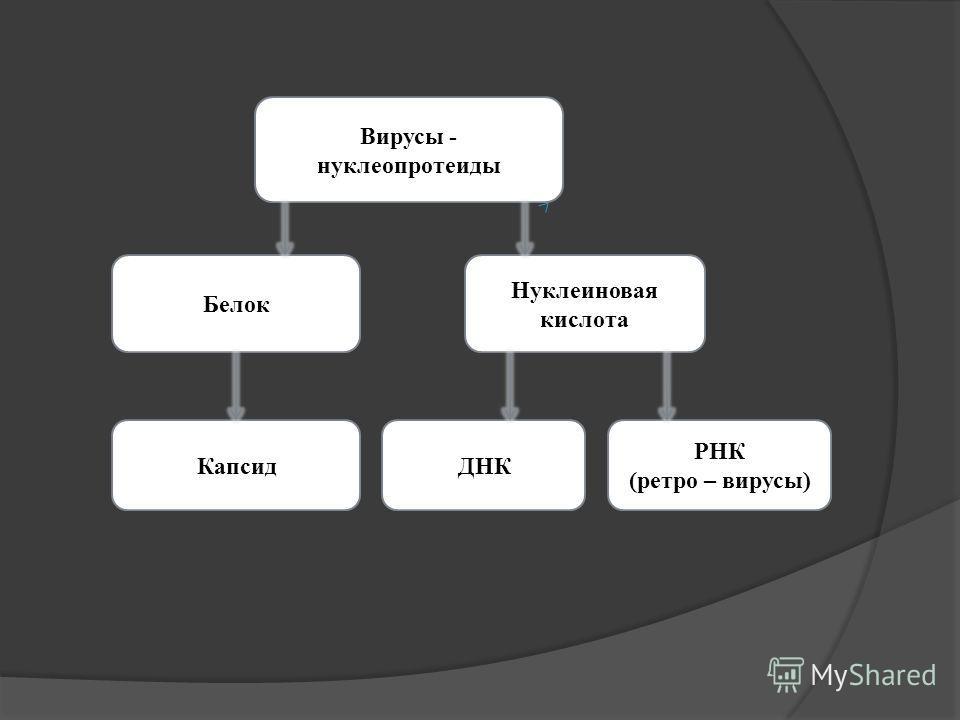 Вирусы - нуклеопротеиды Белок Нуклеиновая кислота КапсидДНК РНК (ретро – вирусы)