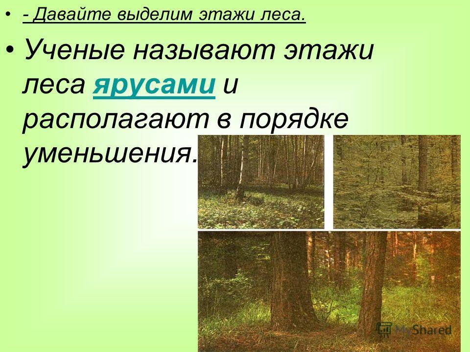 - Давайте выделим этажи леса. Ученые называют этажи леса ярусами и располагают в порядке уменьшения.