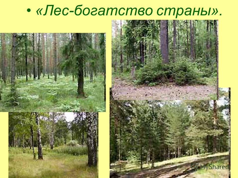 «Лес-богатство страны».