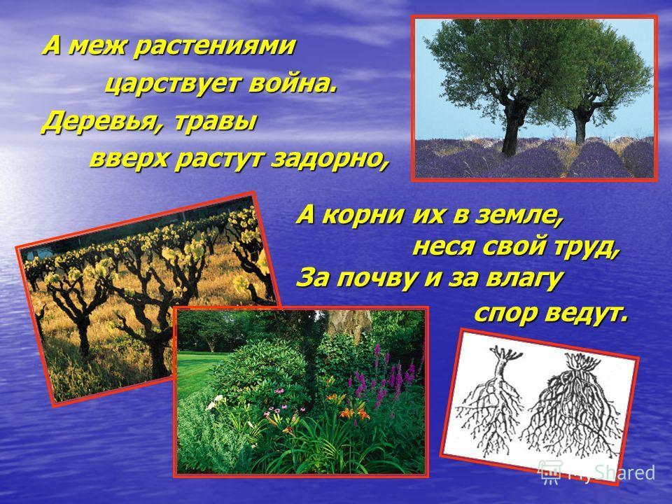 А меж растениями царствует война. царствует война. Деревья, травы вверх растут задорно, вверх растут задорно, А корни их в земле, неся свой труд, неся свой труд, За почву и за влагу спор ведут. спор ведут.