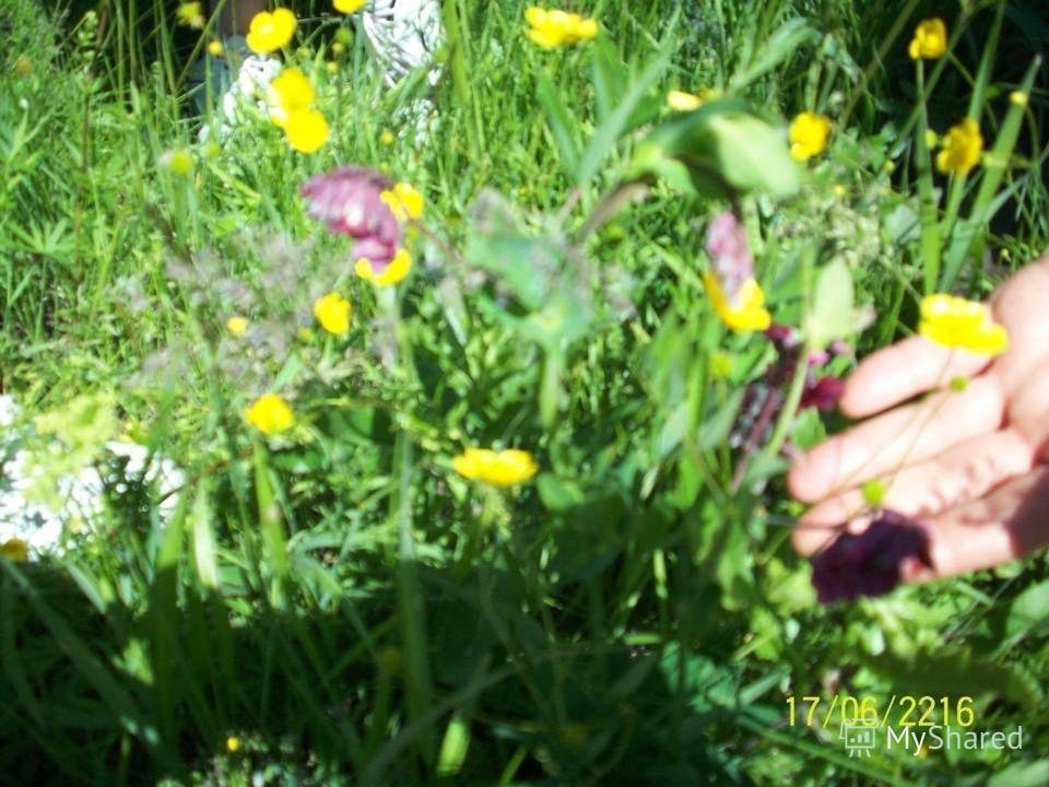 Эпиграф урока: «Природа – сад, и люди в нем – цветы, Не сбережешь ее – не будешь жить и ты»