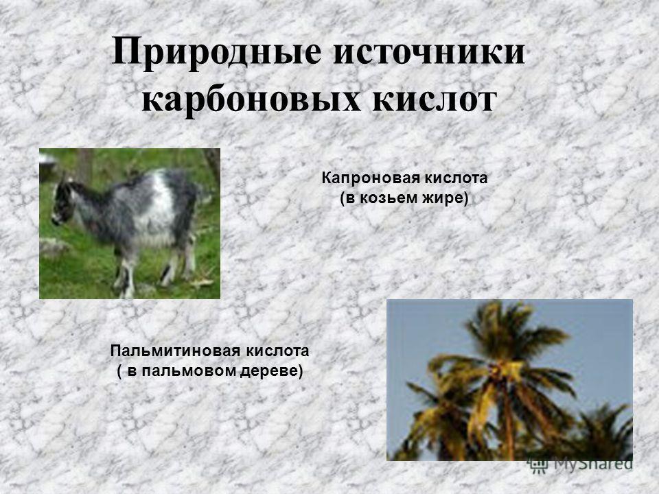 Природные источники карбоновых кислот Капроновая кислота (в козьем жире) Пальмитиновая кислота ( в пальмовом дереве)