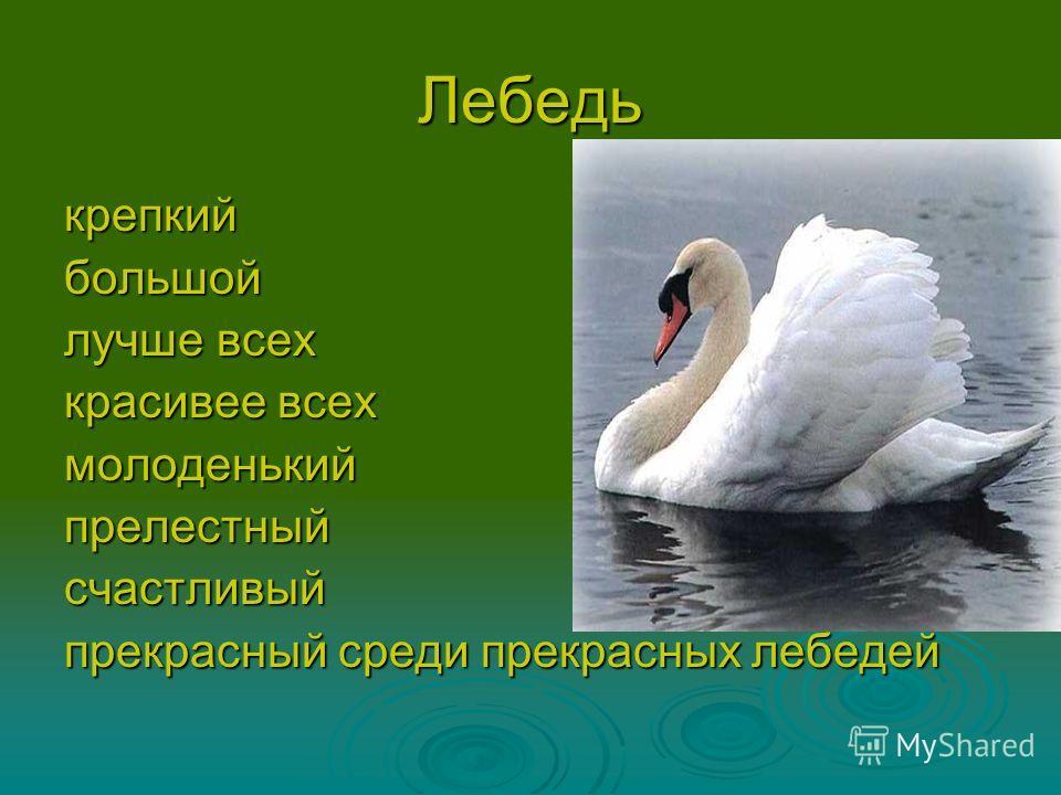 Лебедь крепкийбольшой лучше всех красивее всех молоденькийпрелестныйсчастливый прекрасный среди прекрасных лебедей