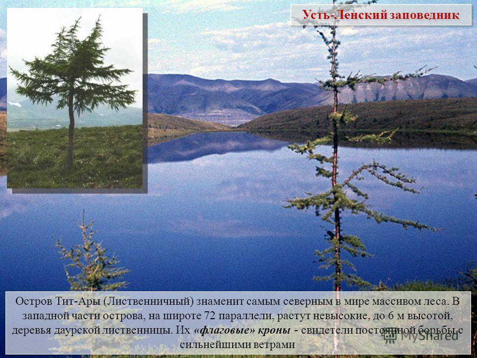 Остров Тит-Ары (Лиственничный) знаменит самым северным в мире массивом леса. В западной части острова, на широте 72 параллели, растут невысокие, до 6 м высотой, деревья даурской лиственницы. Их «флаговые» кроны - свидетели постоянной борьбы с сильней