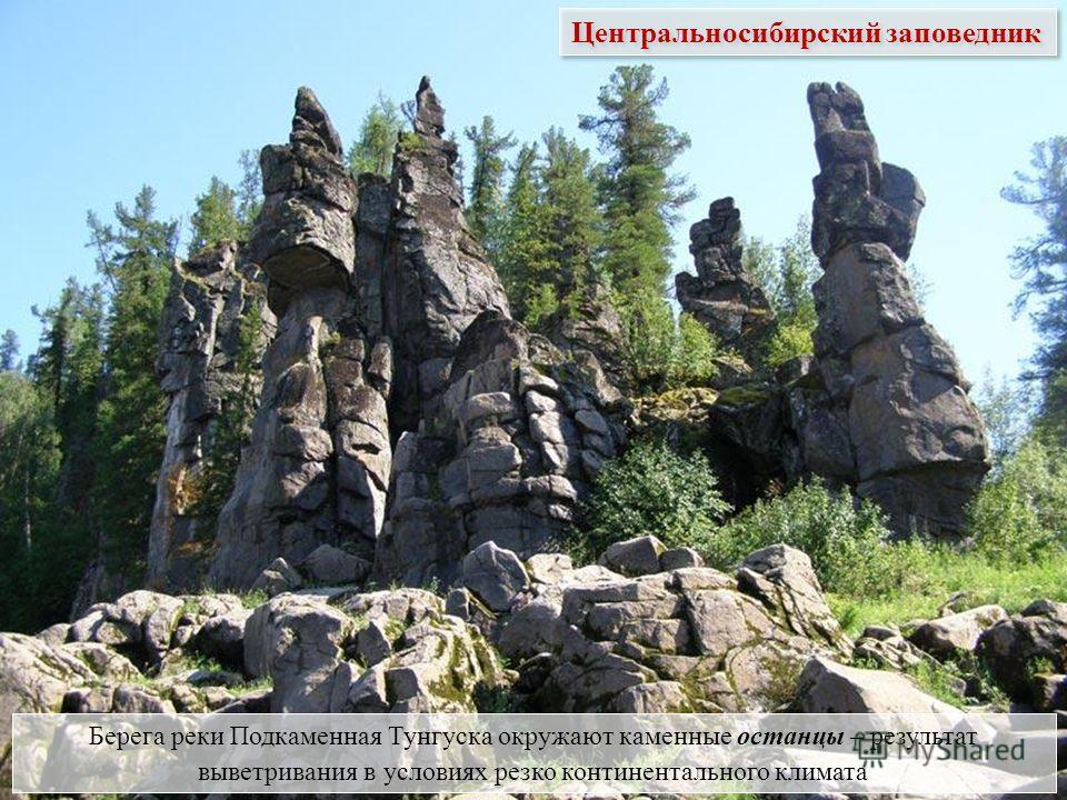 Берега реки Подкаменная Тунгуска окружают каменные останцы – результат выветривания в условиях резко континентального климата Центральносибирский заповедник