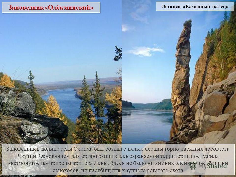 Заповедник «Олёкминский» Заповедник в долине реки Олекма был создан с целью охраны горно-таежных лесов юга Якутии. Основанием для организации здесь охраняемой территории послужила «нетронутость» природы притока Лены. Здесь не было ни зимних оленьих п