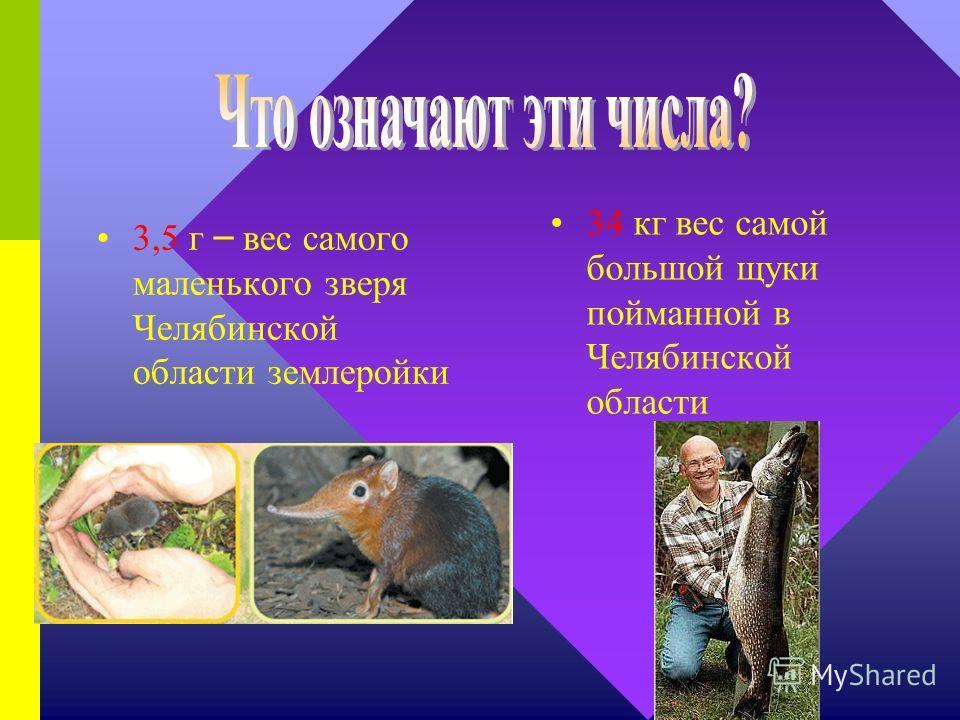 65 км длина самого длинного хребта в Челябинской области Уреньга 600 кг – вес самого крупного зверя в Челябинской области лося