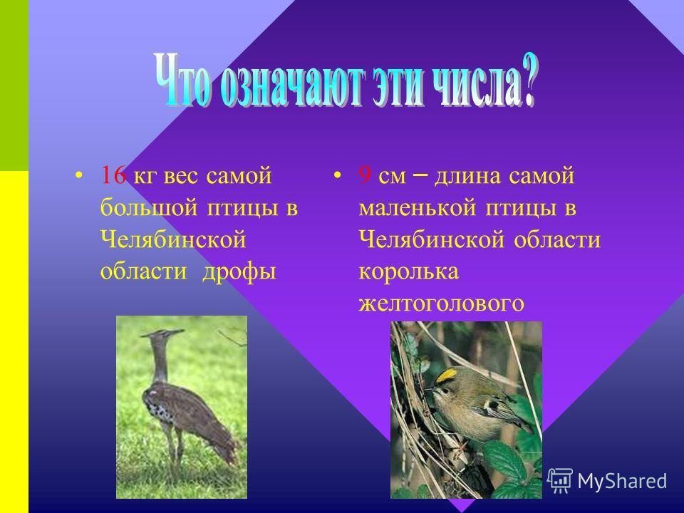 3,5 г – вес самого маленького зверя Челябинской области землеройки 34 кг вес самой большой щуки пойманной в Челябинской области
