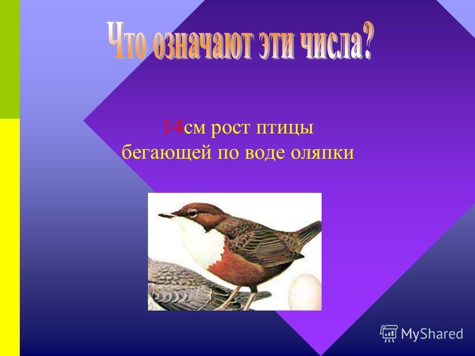 300г – вес зверька, летающего без крыльев белки- летяги 100км/ч – скорость черного стрижа, питающегося на лету