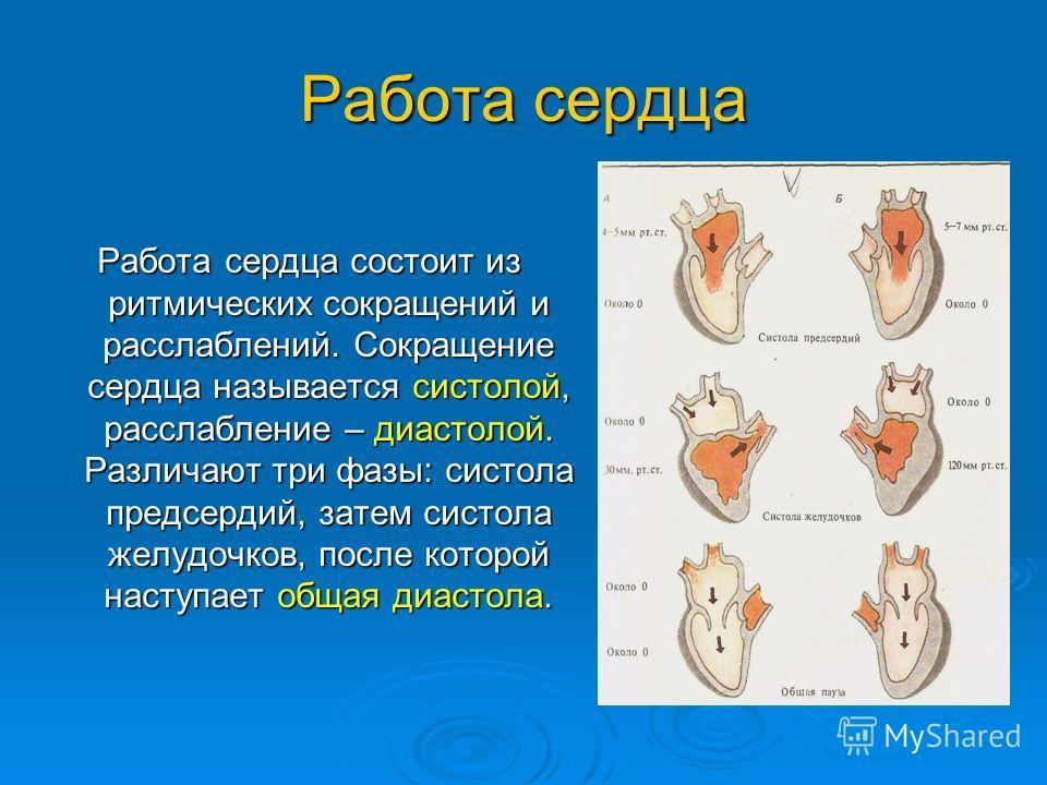 Работа сердца Работа сердца состоит из ритмических сокращений и расслаблений. Сокращение сердца называется систолой, расслабление – диастолой. Различают три фазы: систола предсердий, затем систола желудочков, после которой наступает общая диастола.