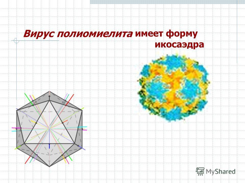 Вирус полиомиелита имеет форму икосаэдра