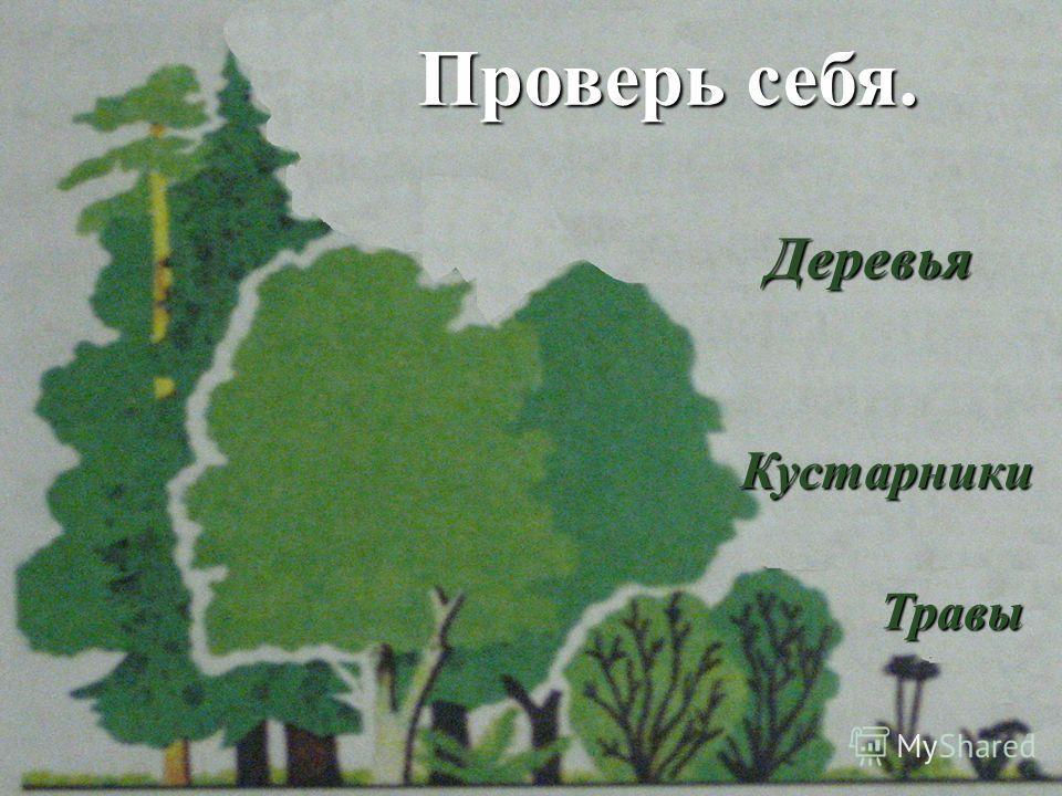 Проверь себя. Проверь себя. Деревья Деревья Кустарники Травы