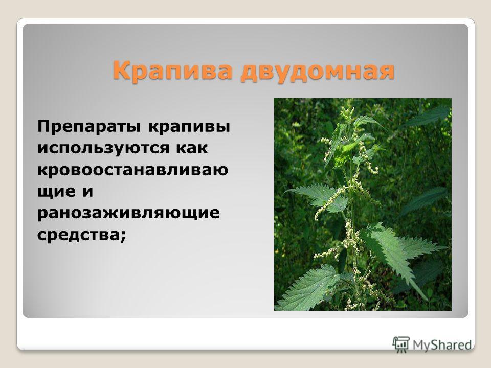 Крапива двудомная Препараты крапивы используются как кровоостанавливаю щие и ранозаживляющие средства;