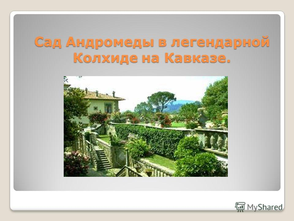 Сад Андромеды в легендарной Колхиде на Кавказе.