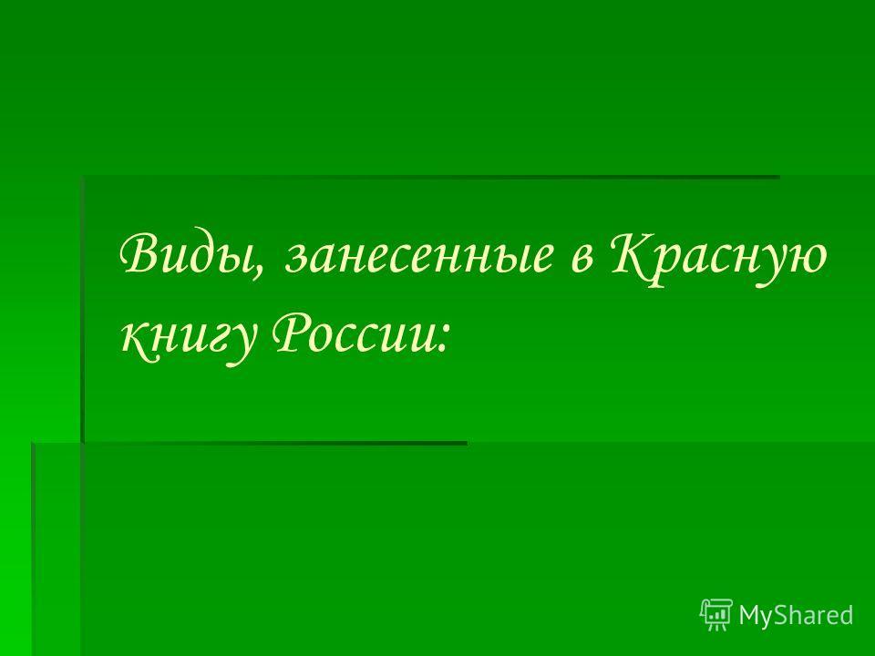 Виды, занесенные в Красную книгу России: