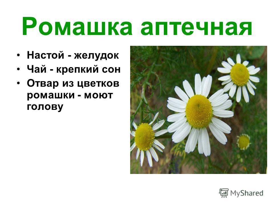 Ромашка аптечная Настой - желудок Чай - крепкий сон Отвар из цветков ромашки - моют голову