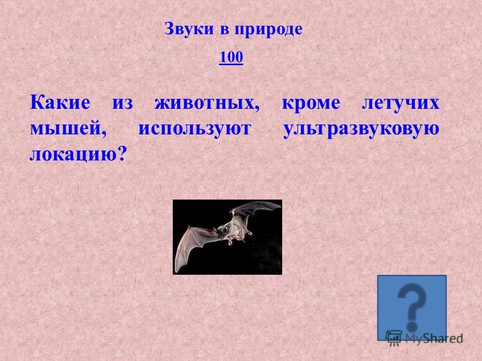 Звуки в природе 100 Какие из животных, кроме летучих мышей, используют ультразвуковую локацию?