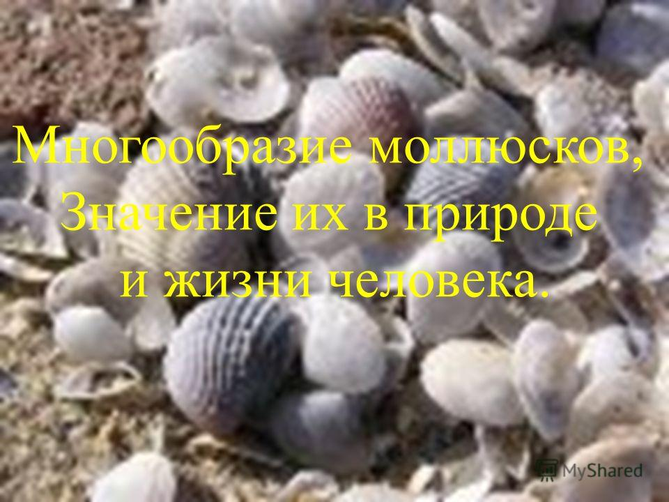 Многообразие моллюсков, Значение их в природе и жизни человека.