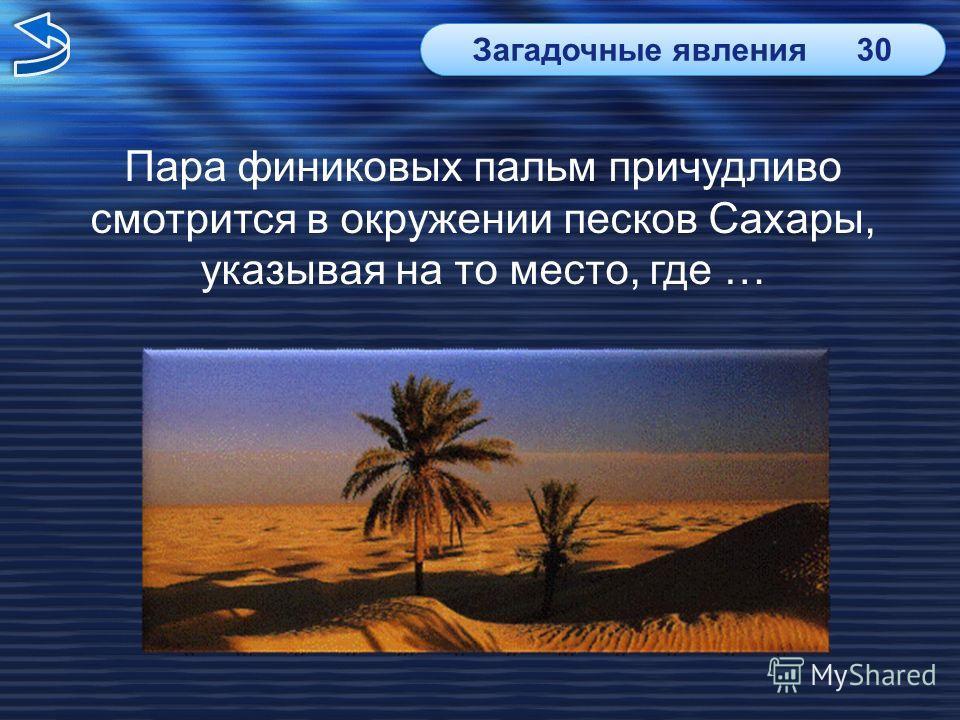 Пара финиковых пальм причудливо смотрится в окружении песков Сахары, указывая на то место, где … Загадочные явления30