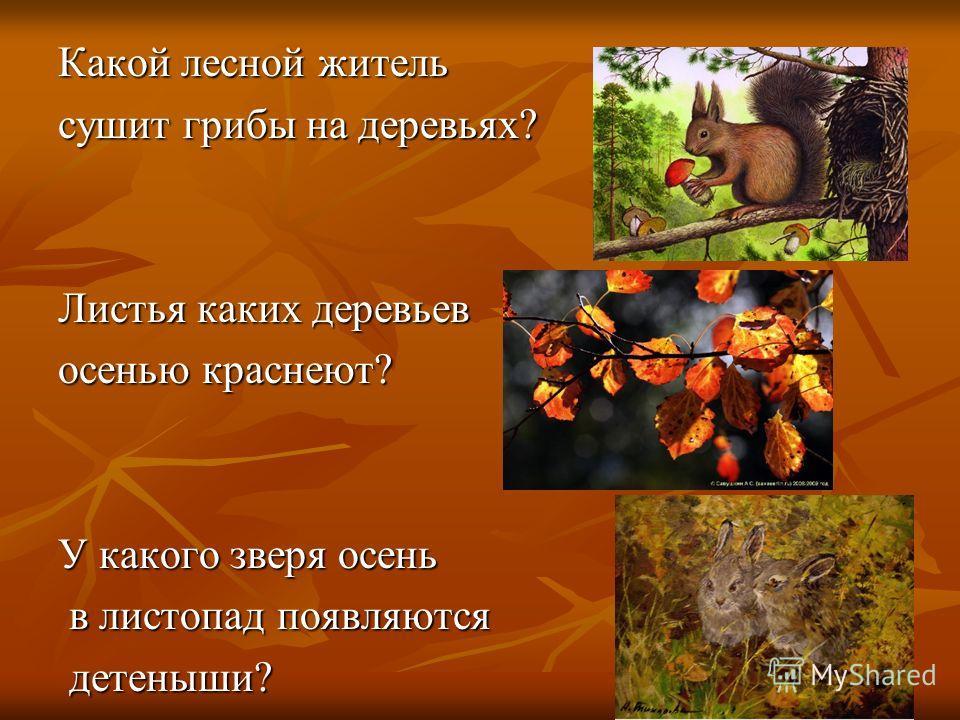 Какой лесной житель сушит грибы на деревьях? Листья каких деревьев осенью краснеют? У какого зверя осень в листопад появляются в листопад появляются детеныши? детеныши?