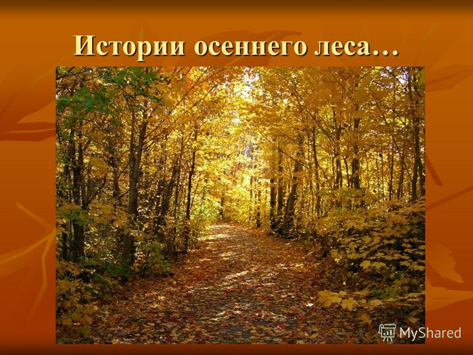 Истории осеннего леса…