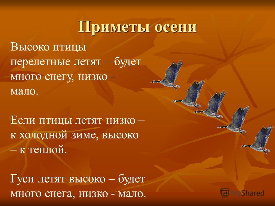 Приметы осени Высоко птицы перелетные летят – будет много снегу, низко – мало. Если птицы летят низко – к холодной зиме, высоко – к теплой. Гуси летят высоко – будет много снега, низко - мало.