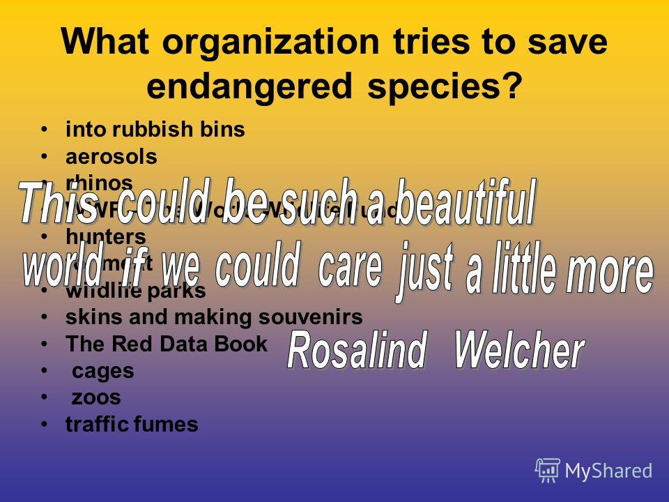 What organization tries to save endangered species? into rubbish bins aerosols rhinos WWF – The World Wildlife Fund hunters for meat wildlife parks skins and making souvenirs The Red Data Book cages zoos traffic fumes