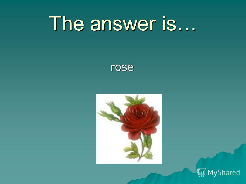 The answer is… rose