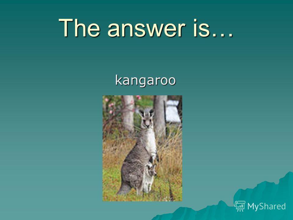 The answer is… kangaroo