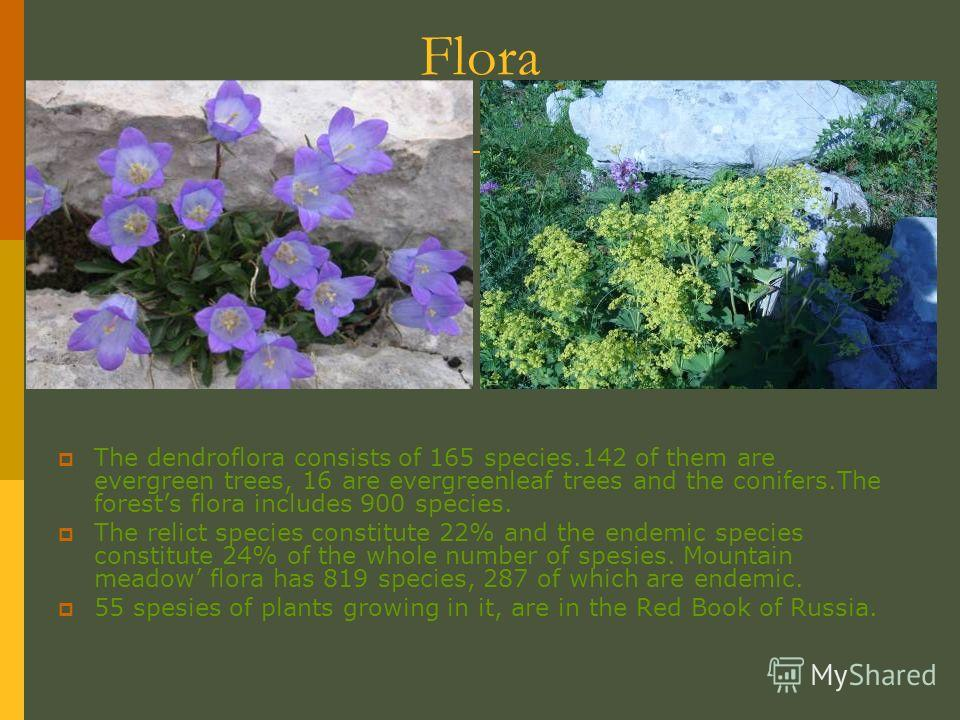 Flora The dendroflora consists of 165 species.142 of them are evergreen trees, 16 are evergreenleaf trees and the conifers.The forests flora includes 900 species. The relict species constitute 22% and the endemic species constitute 24% of the whole n