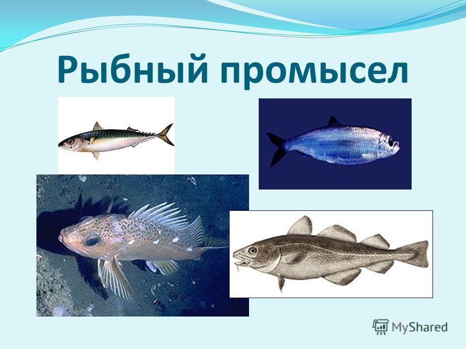 Рыбный промысел
