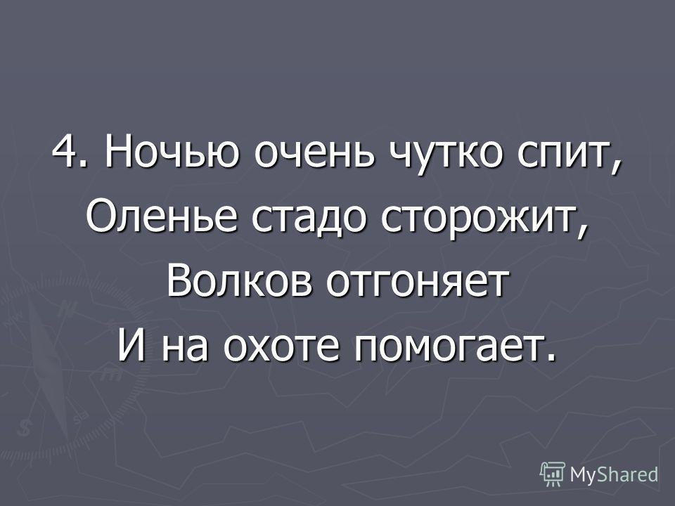 4. Ночью очень чутко спит, Оленье стадо сторожит, Волков отгоняет И на охоте помогает.
