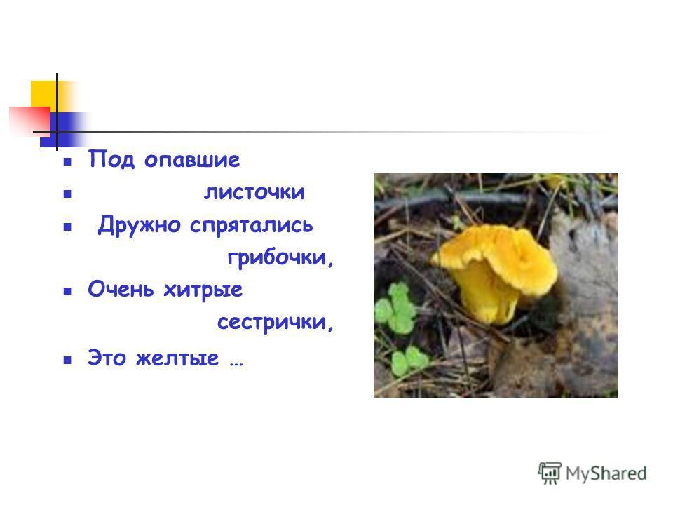 Под опавшие листочки Дружно спрятались грибочки, Очень хитрые сестрички, Это желтые …