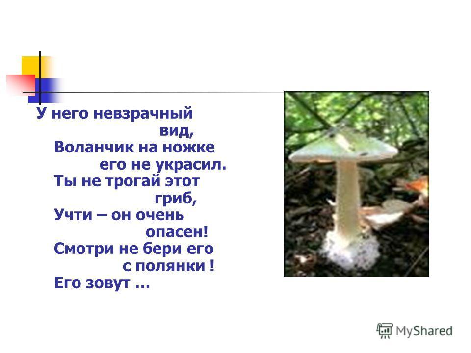 У него невзрачный вид, Воланчик на ножке его не украсил. Ты не трогай этот гриб, Учти – он очень опасен! Смотри не бери его с полянки ! Его зовут …