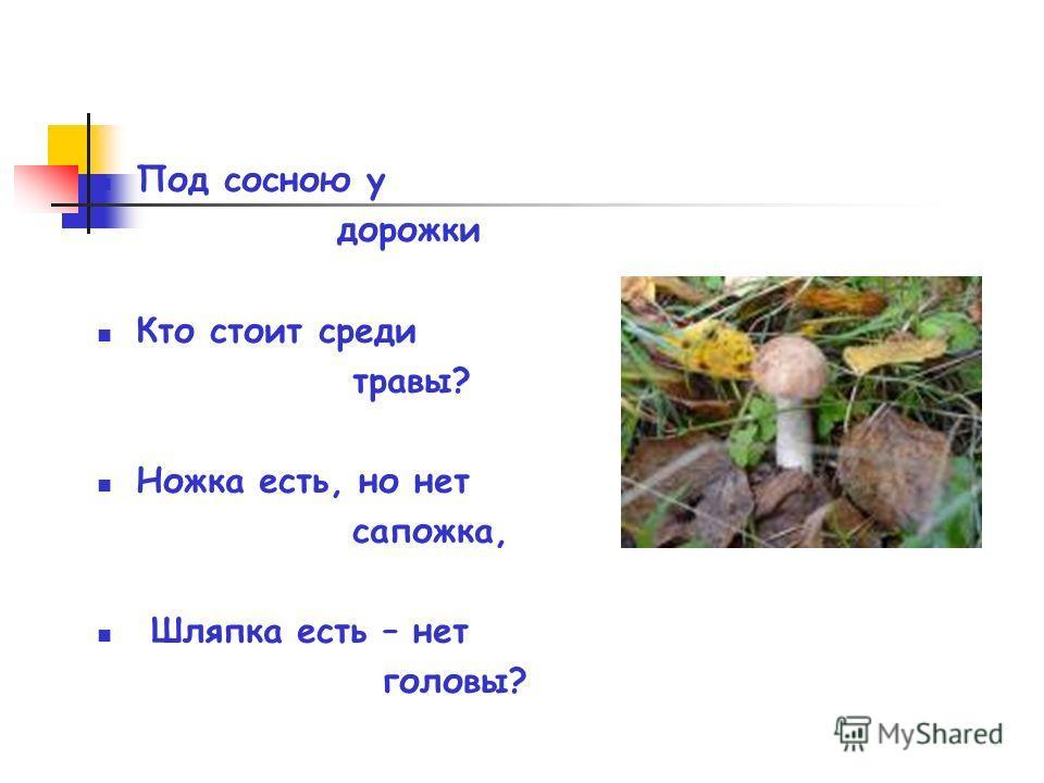 Под сосною у дорожки Кто стоит среди травы? Ножка есть, но нет сапожка, Шляпка есть – нет головы?