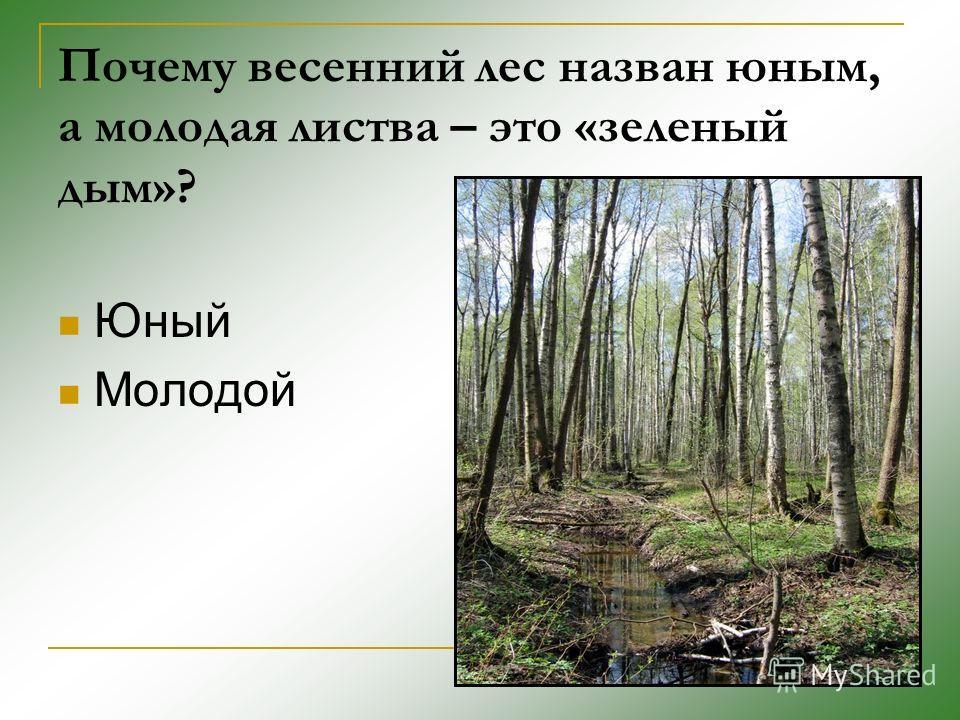 Почему весенний лес назван юным, а молодая листва – это «зеленый дым»? Юный Молодой